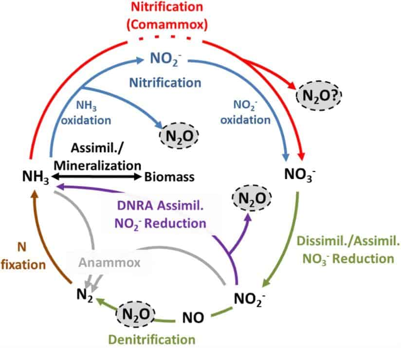 MECHANISMS OF NITROUS OXIDE (N2O) FORMATION IN BIOFILM PROCESSES